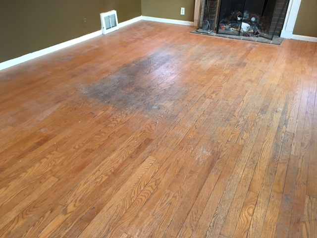 Urine Smell In Hardwood Floor Carpet Review